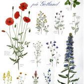 Affisch. Blommor på Gotland